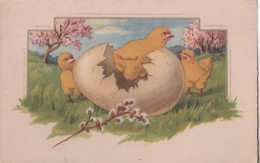 POUSSINS - Easter