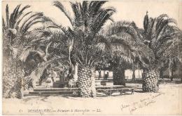 Environs D'Oran - Misserghin Palmiers - TB écrite - Algérie