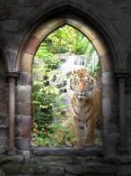 New Postcard, Postkarte, Carte Postale, Animal, Tier, Animale, Tiger, Jungle - Tigers