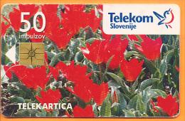 SLOVENIA - SLV 015, Tulipani / Enkratno Bujenje PO Tel., 60.000ex, 1/5/1996, Used As Scan - Slovenia