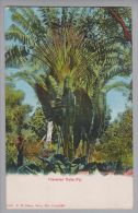 FIJI 1933-06-01 Traveller Palm Fiji Foto Nach Stockholm - Fidji