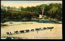 AUSTRALIE BARRON RIVER / Timber Hauling / - Australia