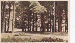 SAVERNAKE  FOREST. MARLBOROUGH -CENTRE OF EIGHT WALKS - Postcards