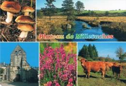 LIMOUSIN PLATEAU DE MILLEVACHES - Multi-vues : Cèpes, Pays Des Mille Sources, Clocher De Bugeat, Bruyéres, Vache Et Veau - Auvergne