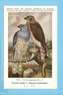 KBIN / IRSNB - Vogels / Oiseaux - 1943 (AS NEW) - 111 - Busard Cendré, Grauwe Kiekendief, Kite, Montagu's Harrier - Vogels