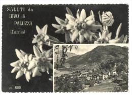 Y489 Saluti Da Rivo Di Paluzza (Udine) - Carnia - Panorama - Fiori Fleurs Flowers / Viaggiata 1957 - Altre Città