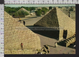 B8879 NIGERIA GROUNDNUT PYRAMIDS KANO VG Cut Stamp CATTLE RANCHING Holes Fori - Nigeria