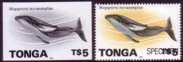 Tonga 1996 Proof + Specimen - $5.00 Whale - Read Details In Item Description - Walvissen