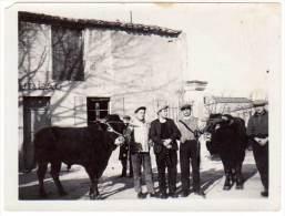 Photo Personnages Avec Leurs Vaches, Taureaux - Métiers