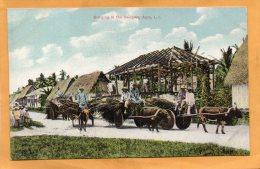 Bringing In The Shingles Apra Guam LI 1905 Postcard - Guam
