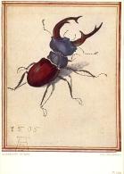 PK Illustr. Albrecht Durer - Kever - Der Hirschkafer - Non Classificati