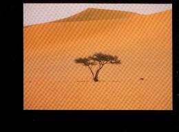 ALGERIE : SAHARA : Tassili Des Ajjers Plaine D'Admer  Désert  Arbre Tree - Other