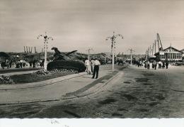 CALAIS - Avenue Poincaré Et Monument Aux Morts - Calais