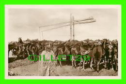 LA PUSZTA, HONGRIE - TROUPEAU DE CHEVAUX À LA FONTAINE DOUBLE - TRAVEL IN 1922 - - Hongrie