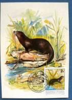 HONGRIE LOUTRE Sur CARTE MAXIMUM  (protection De La Nature) 1986 - Timbres