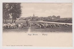 57  -   PAYS MESSIN -  MAGNY  - TROUPEAU DE MOUTONS ET CHEVRES - BERGER - Metz Campagne
