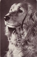 Photo Card Dog Cocker Spaniel Red Heart Series - Animals