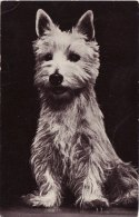 Photo Card Dog West Highland White Terrier Red Heart Series - Animals