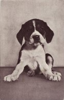 Photo Card Dog Beagle Puppy Red Heart Series - Animals
