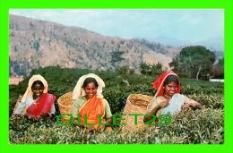 CEYLON, SRI LANKA - TEA PLUCKERS UP-COUNTRY - - Sri Lanka (Ceylon)