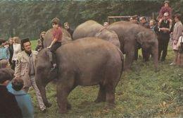 ANIMAL POSTCARD -BABY INDIAN ELEPHANTS. ROYAL WINDSOR SAFARI PARK - Elephants