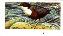 Brooke Bond Tea Trade Card Wild Birds In Britain No 6 Dipper - Tea & Coffee Manufacturers