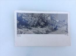 E.29  ESPAGNE  /  MALLORCA  /  Carte Photo  /  Figuier De Barbarie - Mallorca
