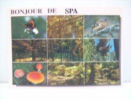 """Bonjour De """"Spa""""  (Belgio) - Spa"""