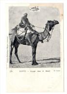 EGYPTE  Voyage Dans Le Désert Comptoir Philatélique D'Egypte Alexandrie E. Lauro N°374 DOS SIMPLE Non Circulé - Postcards