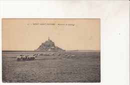 Mont Saint Michel Mouton Au Paturage - Le Mont Saint Michel