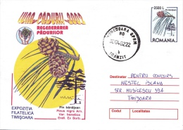 PINUS NIGRA ARN. VAR. BANATICA ENDL. EX BORB.,2002,COVER STATIONERY, ROMANIA - Bäume