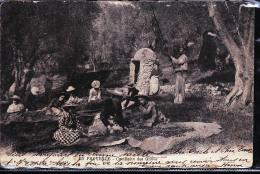 CEUILLETTE DES OLIVES - Cultures