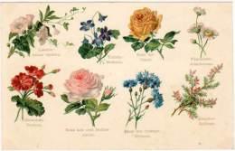 Cpa Fantaisie, Fleurs : Violette, Liseron, Pâquerette, Bruyère, ... (FA) - Tarjetas De Fantasía