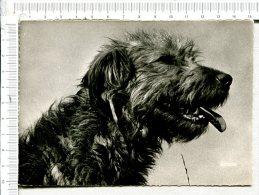 CHIEN -  Le Serviteur Du Berger - Hunde