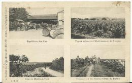 Gard :  VERGEZE ,  Société  Des  Vignobles  De  STE Thérèse  Côtes Du  Rhône - Vergèze