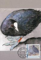 D13003 CARTE MAXIMUM CARD 2013 NETHERLANDS - FOULQUE COOT CP ORIGINAL - Ducks
