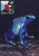D13015 CARTE MAXIMUM CARD RR FD 2006 NETHERLANDS - BLUE FROG - DENDROBATUS AZUREUS - BLIJDORP ZOO ROTTERDAM CP ORIGINAL - Frogs