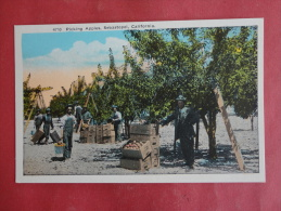Sebastopol,CA--Picking Apples--not Mailed--PJ 171 - Vereinigte Staaten