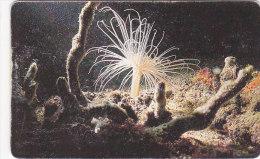 Venezuela, CAN2-0190, Marine Fauna, Anémona Blanca (3/10), 2 Scans. - Venezuela