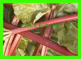 RECIPES - RECETTES - RHUBARBE - RABARBER - - Recettes (cuisine)