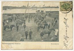 Maanviljelysnayttely Kupiossa Hevosnayttely P. UsedKuopio To Cienfuegos Cuba Horses - Finlande