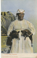 Barbados  A Pig Seller Marchande De Cochons Noirs  JRH Seifert P. Used Barbados 1910 - Barbades