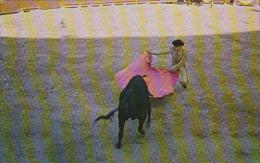 Mexico Plaza De Toros Bull Fight