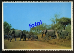 PHOTO POSTCARD ELEPHANTS  SOUTH AFRICA CARTE POSTAL - Mozambique