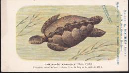 CPA - (Animaux) Maison E. Soubes Jeune Bordeaux - Tortues - Chélonée Franche - Turtles