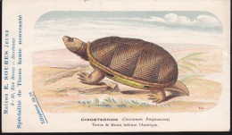 CPA - (Animaux) Maison E. Soubes Jeune Bordeaux - Tortues - Cinosternon - Turtles