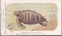CPA - (Animaux) Maison E. Soubes Jeune Bordeaux - Tortues - Caouanne - Turtles