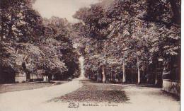 BARBIZON - L'Avenue - Barbizon