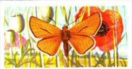 Brooke Bond Tea British Butterflies No 47 Small Skipper - Tea & Coffee Manufacturers