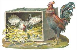 Découpis Légèrement Gaufré ,poule,poussins,coq, DIM. 6.5cm X 10cm Chacun, Jamais Collé - Tiere